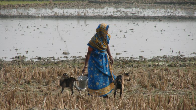 Indian women collecting water
